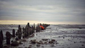 Vadehavshostel, Brøns natur